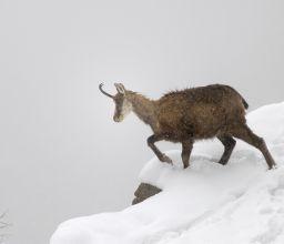 L'Hiver sur l'Alpe