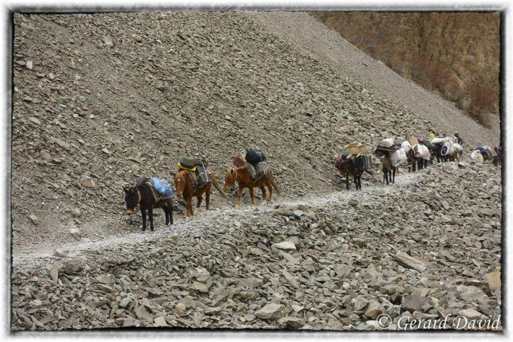 Ethnique_Ladakh_Inde_15-03-2016_116